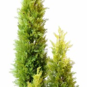 cypres-artificiel-mini-juniperus2