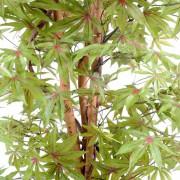aralia-new-vert-rouge-2-2