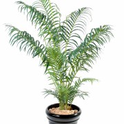 areca-artificiel-1