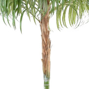 areca-artificiel-2