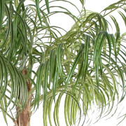 areca-artificiel-3