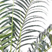 areca-artificiel-4