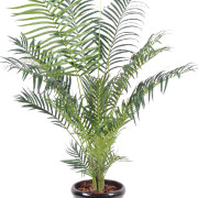 areca-artificiel-5