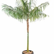 areca-artificiel-palm-tronc-1