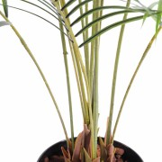 areca-artificiel-plast-2