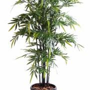 bambou-black-natural-nc-1
