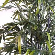 bambou-black-natural-nc-2