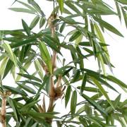 bambou-bouddha-tree-4
