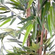 bambou-eco-2