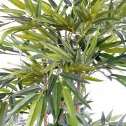 bambou-eco-3