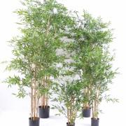 bambou-japanese-plast-3