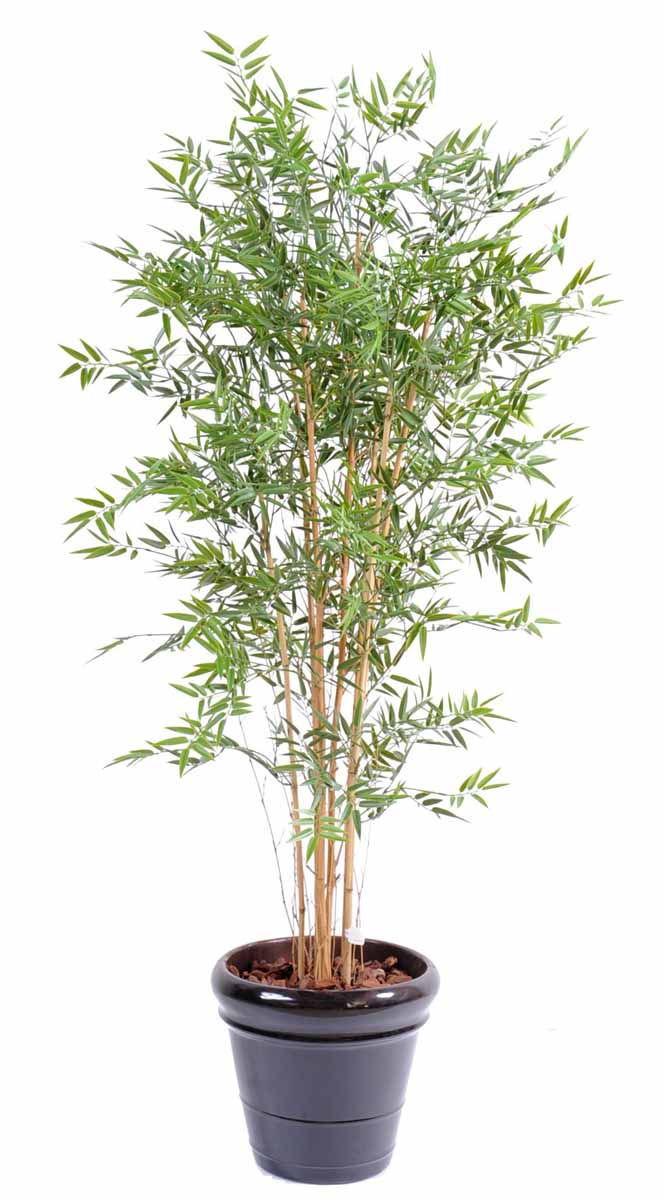 bambou-japanese-plast-6