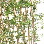 bambou-japanese-plast-haie-2