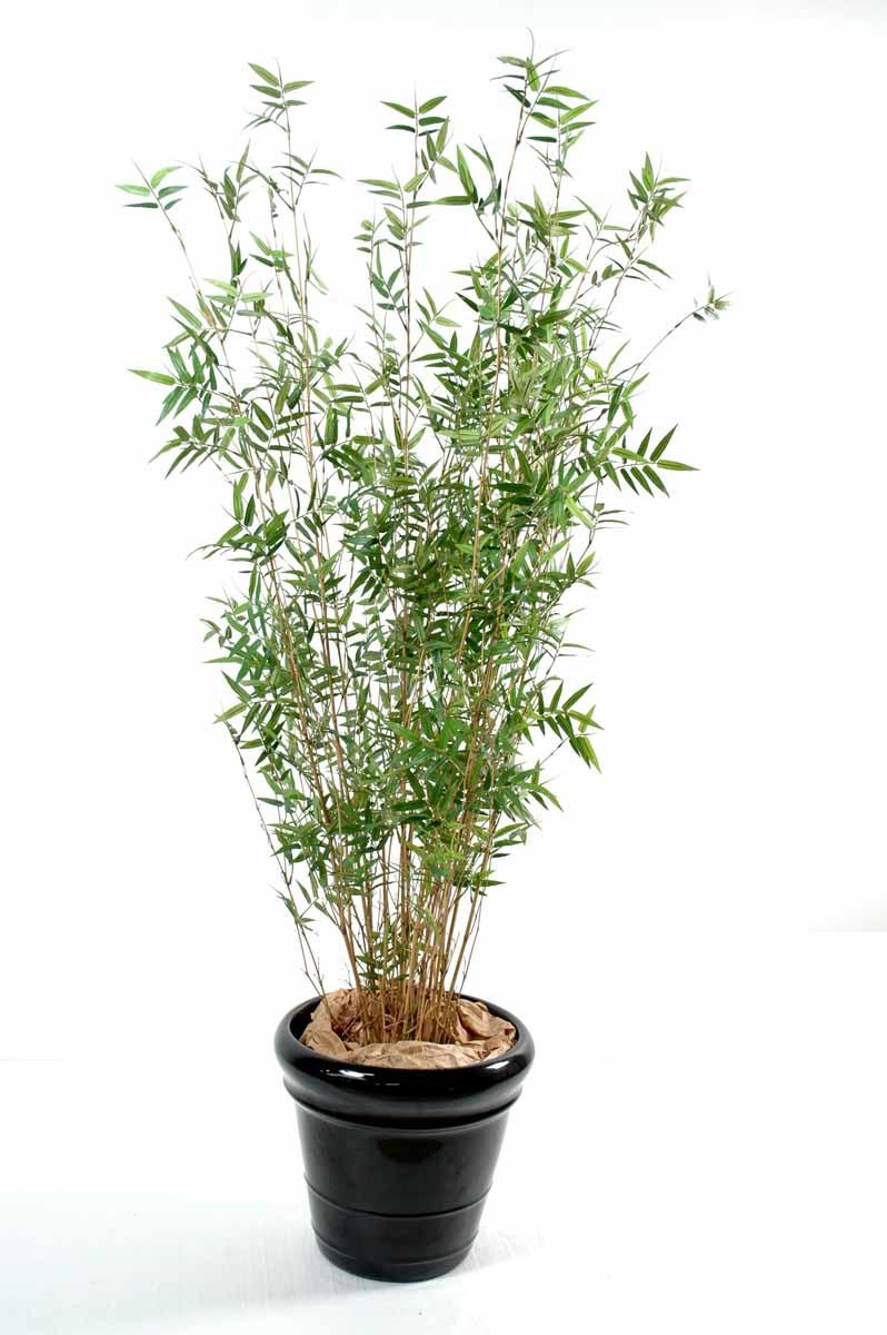 bambou-multitree-oriental-1