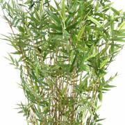 bambou-multitree-oriental-2
