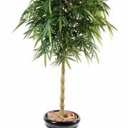 bambou-new-bouddha-1