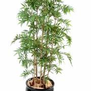 bambou-oriental
