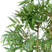 bambou-oriental-2