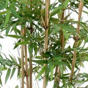 bambou-oriental-3
