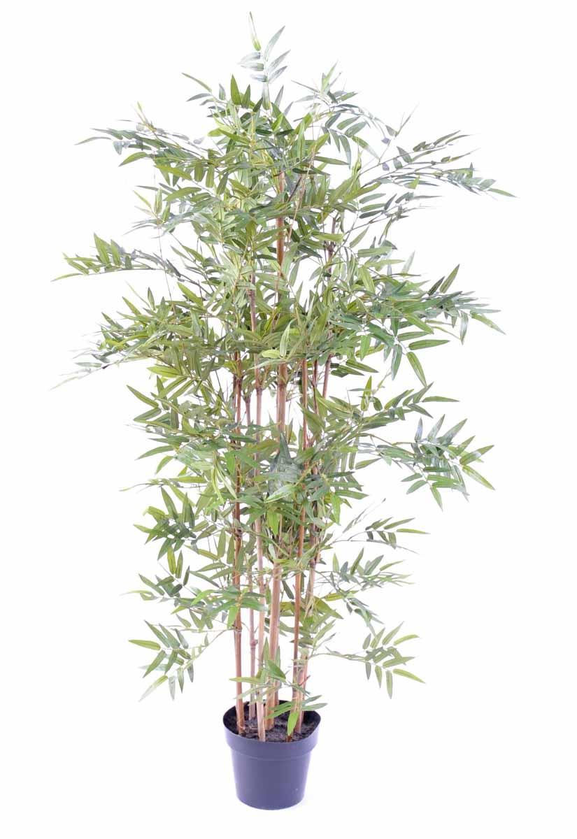 bambou-oriental-eco-1
