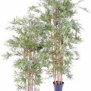 bambou-oriental-eco-4