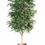bouleau-arbre-1