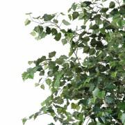 bouleau-arbre-2