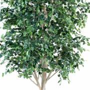 bouleau-arbre-4