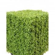 buis-artificiel-17192-71-2-plante-artificielle
