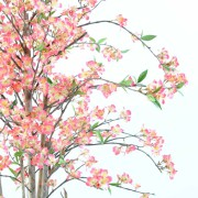 cerisier-fleur-new-1m60-2