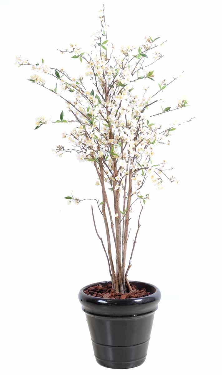 cerisier-fleur-new-1m60-4
