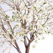 cerisier-fleur-new-2m80-2