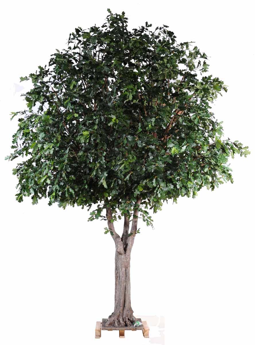 chene-arbre-1