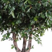 chene-arbre-2