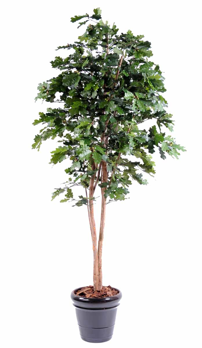 chene-n-tree-1