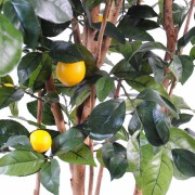 citronnier-new-2