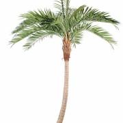 cocotier-artificiel-courbe-1