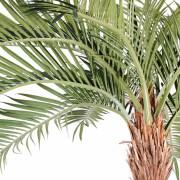 cocotier-artificiel-courbe-2