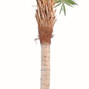 cocotier-artificiel-courbe-3