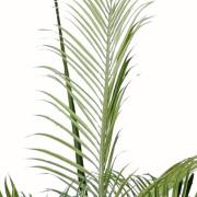 cocotier-artificiel-courbe-5