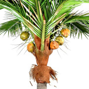 cocotier-artificiel-fruits-3