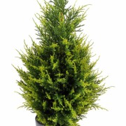 cypres-artificiel-juniperus-1