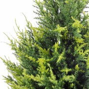 cypres-artificiel-juniperus-2