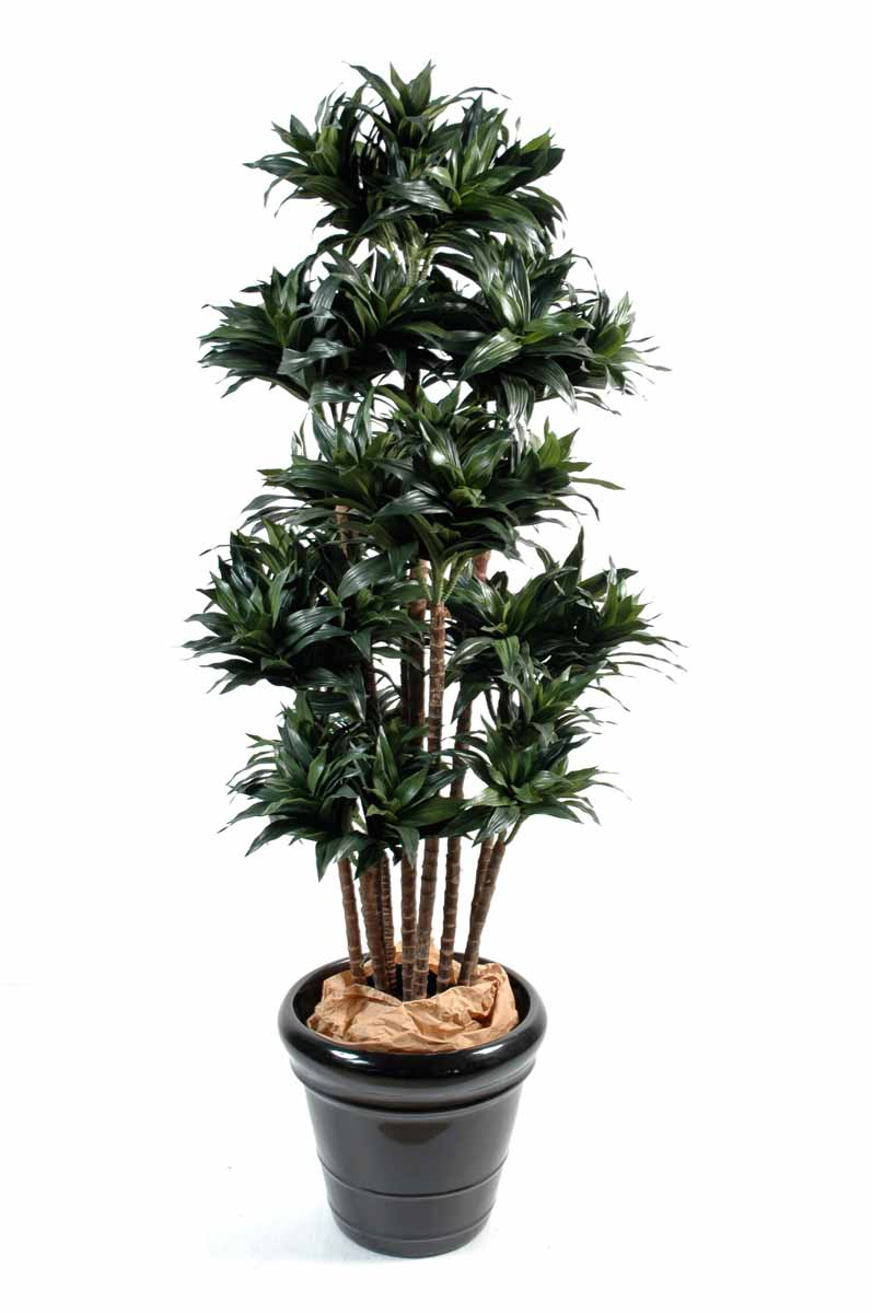 dracena-artificiel-compacta-mt-1