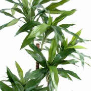 dracena-artificiel-vert-4
