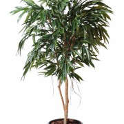 ficus-artificiel-alii-royal-1