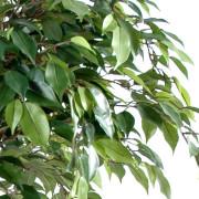 ficus-artificiel-boule-natasja-2