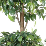ficus-artificiel-double-boule-3
