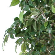 ficus-artificiel-double-boule-4