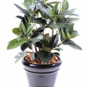 ficus-artificiel-elastica-buisson-1